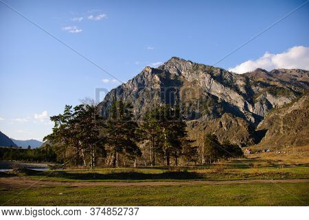 Grassy Meadow And Coniferous Trees On The Background Of The Altai Mountains On A Warm Sunny Spring D