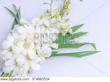Beautiful Pandanus Orchids In Nature On A White Background. Used To Pay Respect To Monks In Religion