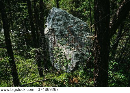 Atmospheric Landscape With Great Stone In Deep Forest Among Rich Vegetations. Colorful Woodland Scen