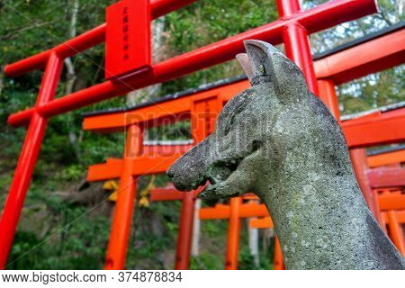 Nagasaki, Japan, 01/11/19. Stone Guardian Fox Statue With Red Torii Gate In The Background In Suwa S