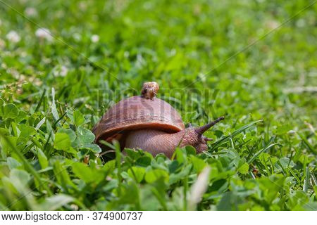 Two Snails, A Small One Sitting On The Shell Of A Large One. The Concept Of Friendship And Mutual As