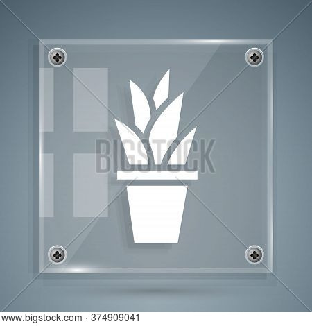 White Plant In Pot Icon Isolated On Grey Background. Plant Growing In A Pot. Potted Plant Sign. Squa