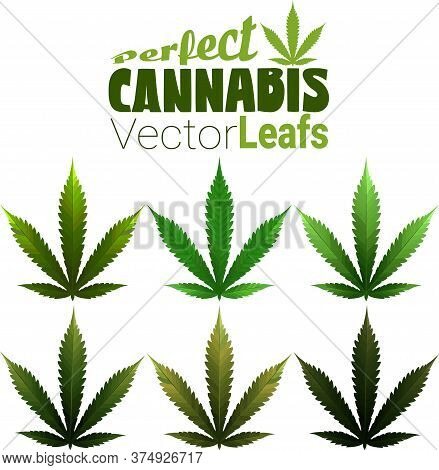 Perfect Marijuana Leafs In 100% Vector And Different Colors. Great Assets To Have Handy For Your Nex