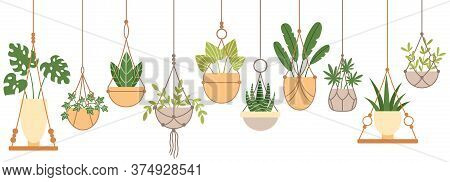 Plants In Hanging Pots. Set Of Plant Hang On Rope, Houseplant Garden, Flowerpot Grow, Vector Illustr