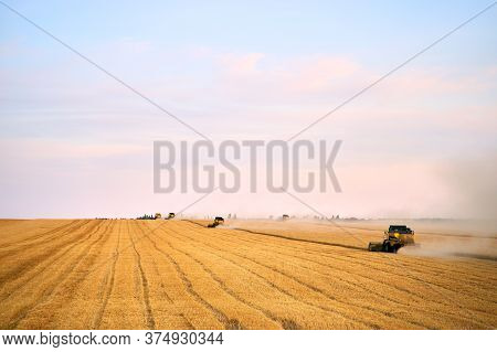 Combine Harvesters Working In A Wheat Field On Sunset Round About. Harvesting Machine Driver Cutting
