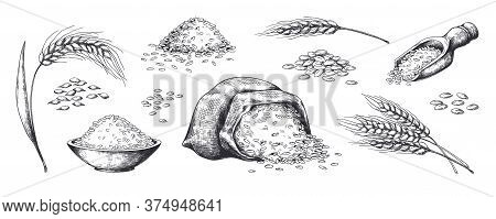 Hand Drawn Wheat. Grains Plants In Bag And Cereal In Bowl, Rye Barley And Wheat Ear Spikes. Vector S