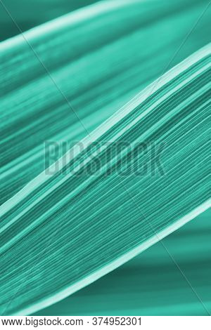 Aquamarine Floral Background. Turquoise Tinted Backdrop Or Wallpaper From Plant Leaves. Natural Text