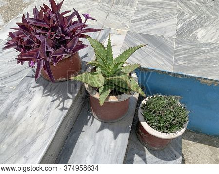 Purple Plant And Green Sukulents In Pots On The Stairs Of The House