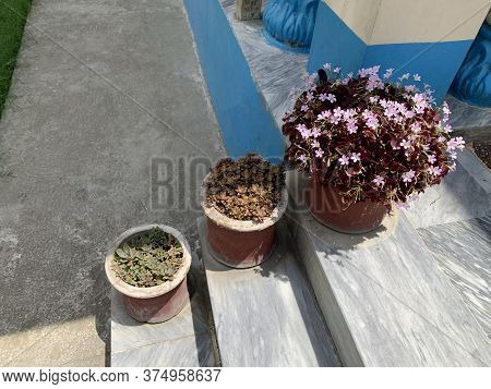Pink Flowers And Green Sukulents In Pots On The Stairs Of The House
