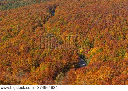 Aerial view of red leaf autumn fall season for Forest woodland in Aomori Tohoku Japan