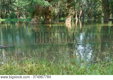 flood in the forest, river with high water level, flooding, nature in summer on a bright day