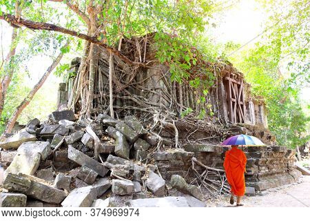 Giant trees on ruin of library and buddhist monk with rainbow umbrella in Koh Ker complex, Cambodia. UNESCO world heritage site