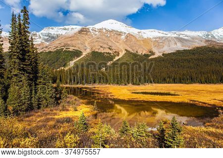 Autumn Journey to the Rockies of Canada. Shallow lake overgrown with yellowed grass. At the foot of Lake Peyto. Active, eco and photo tourism concept