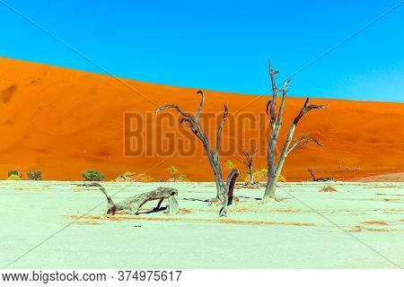 The bottom of the dead dried lake Sussussflay. Orange dunes, dead trees and ringing silence. Clay plateau in the Namib Naukluft desert. Namibia. The concept of extreme, exotic and photo tourism