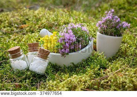 Bottles Of Homeopathic Globules, Mortars Of Thyme And Medicinal Herbs On A Moss In Forest Outdoors.