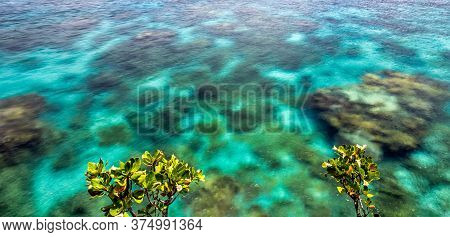 Close View Of Crystal Clear Ocean Water With Coral Reefs Underneath It And Small Trees Above The Sur