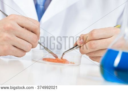 Microbiologist Researching Food Sample With Tweezers In Petri Dish. Quality Control Foods And Bioche
