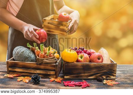 Farmer With Eco Fruit And Vegetable In Autumn. Agricultural On Harvest Cornucopia In Fall Season And
