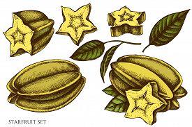 Vector Set Of Hand Drawn Colored Starfruit Stock Illustration