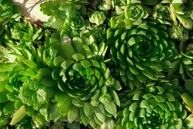 Desert Nature Decoration. Outdoor Succulent Close Up In The Natural Twirls. Green Plant Background.