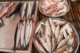 Fresh reef fish caught for seafood market