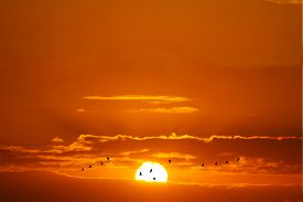 Sunset And Silhouette Birds Flying Red White Cloud And Orange Yellow Gold Sky