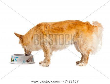 Spritz Dog On White Background