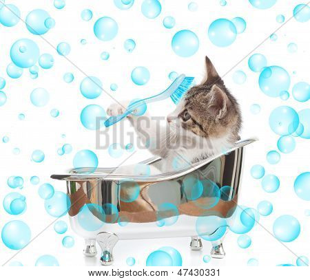Puppy cat in the bathtub with studio lighting poster