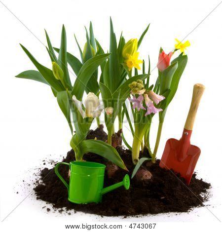 Blumengarten im Frühjahr
