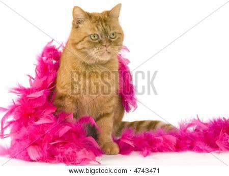 Domestic Red Cat Sitting Dressed Up With A Pink Boa