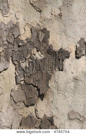 Tree Bark Texture File