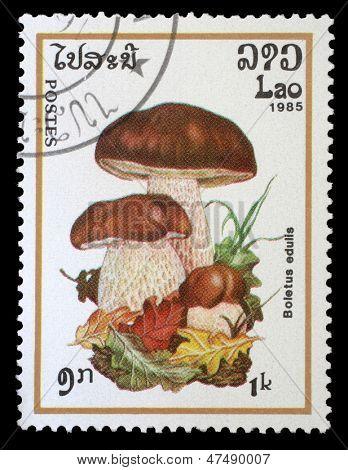 LAOS - CIRCA 1985: Eine Briefmarke gedruckt in Laos zeigt Pilz mit der Aufschrift