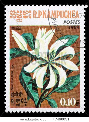KAMPUCHEA-CIRCA 1984: A stamp printed in the Cambodia, depicts a flower Magnolia (disambiguation), circa 1984