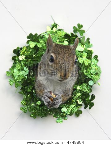 St. Patrick's Day Squirrel
