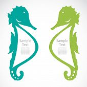 The design of the seahorse on white background poster
