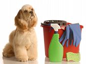 house training a puppy - cocker spaniel sitting beside bucket with cleaning products poster