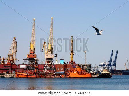 Sea port and sea gull