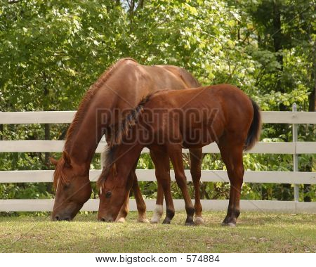 Mare And Foal In The Spring