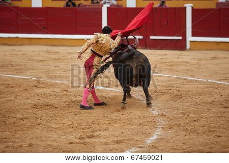 Torero In Action