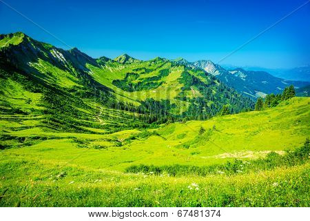 Beautiful mountainous landscape, fresh green plants and trees on high Alpine mountains, majestic panoramic scene, traveling and tourism concept