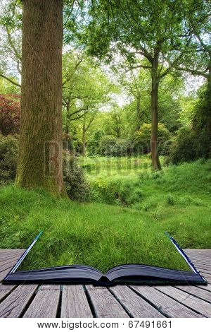 Landscape image of vibrant lush green forest woodland scene Creative concept poster