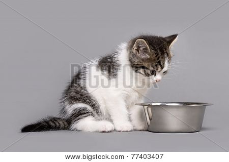 Little Kitten Eating Out A Big Bowl