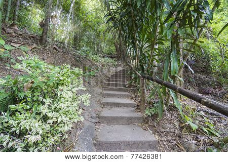 Forest pathway step up the hill