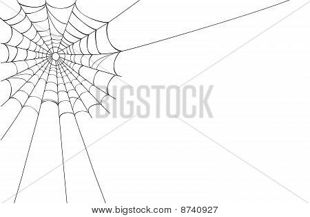Vector Spider Web On White