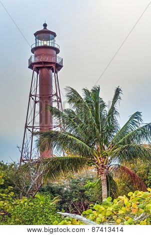 Palm And Lighthouse
