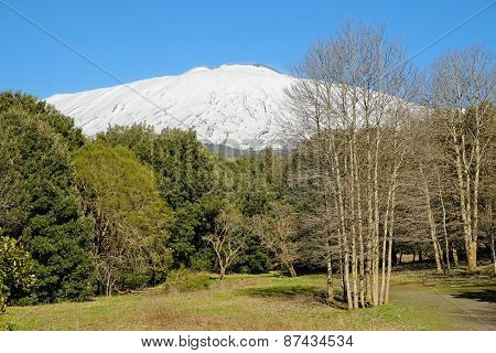 woods and snowy Etna in National Park, Sicily