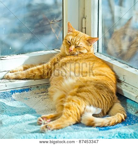 Fat Orange Cat Sleeping On A Balcony With Sunlight