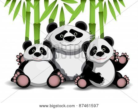 Family Of Pandas