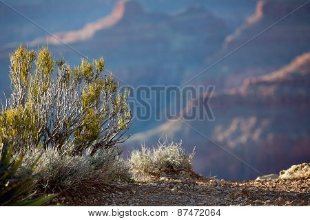 Sunset view of the Grand Canyon from the Hopi point along the South Rim Arizona landmark. Bokeh blurred background in focus foreground great for text or advertising poster