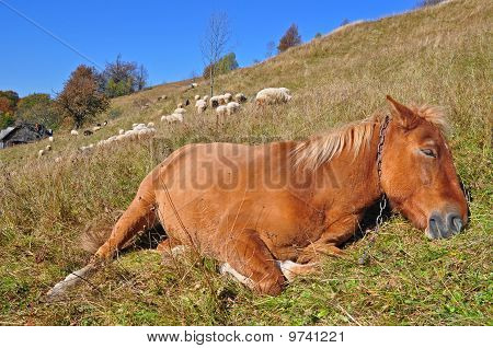 The horse has a rest on a hillside.